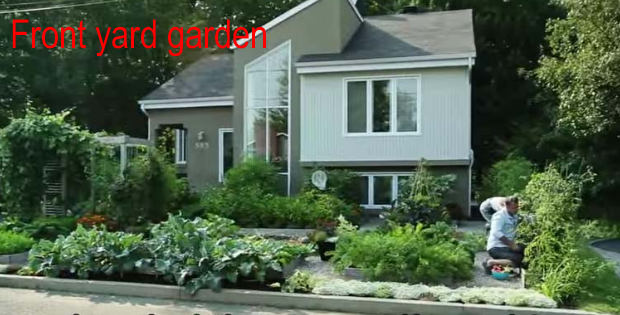 Drummondville's front yard vegetable garden  (VIDEO)