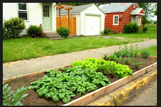 Free Vegetable Gardens in L.A.