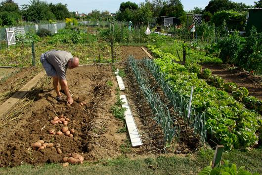 high yield garden