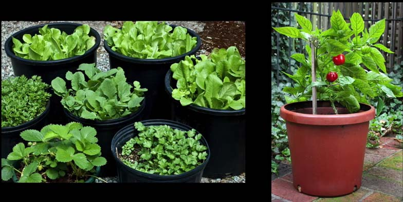 Square Foot Gardening: A Small Space Revolution (VIDEO)
