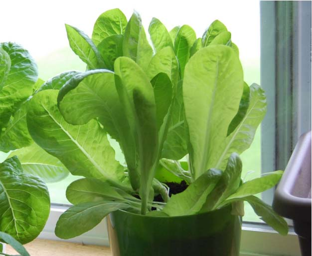 8 Edibles You Can Grow Indoors in the Winter