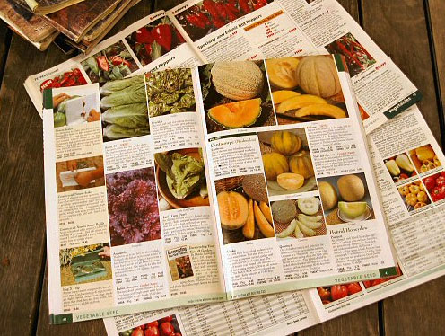 GETTING THE BEST OUT OF YOUR SEED CATALOGS