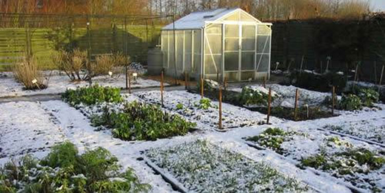 8 Winter Gardening Tips You Must Read